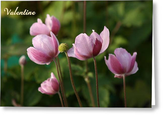 V6-japanese Anemones Greeting Card by Barbara  White