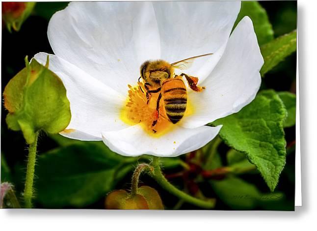 Vacaville Honey Bee Greeting Card