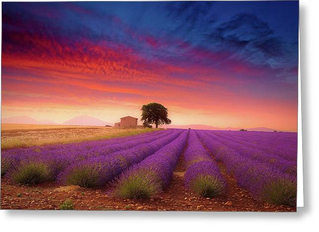 Valensole Plateau Greeting Card by Giovanni Allievi