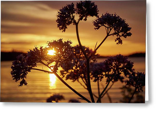 Valerian Sunset Greeting Card