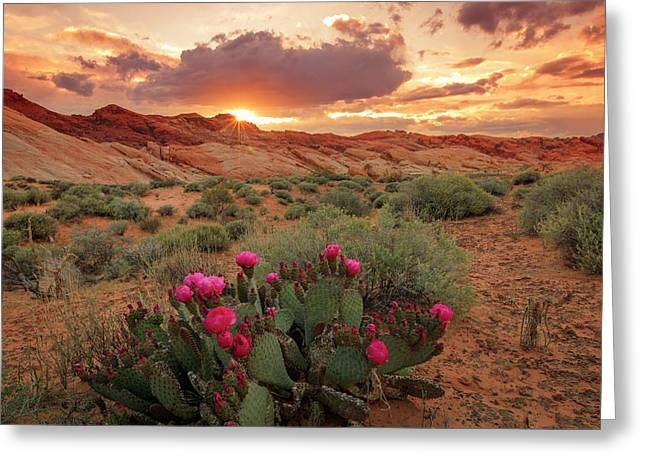 Valley Of Fire Greeting Card by Johnny Adolphson