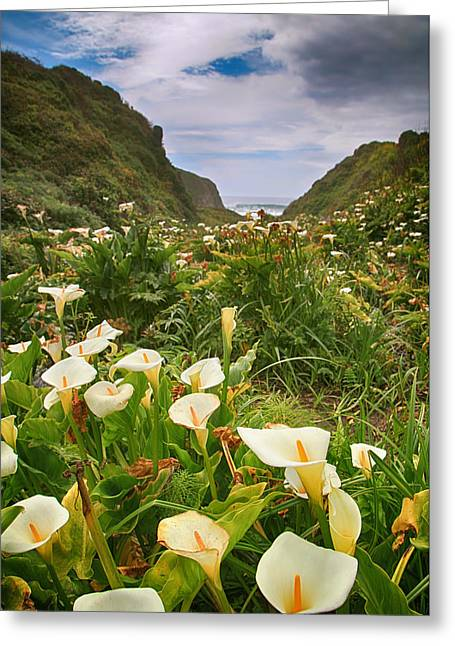 Valley Of The Lilies Greeting Card