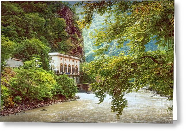 Valley Of Trees Greeting Card by Svetlana Sewell