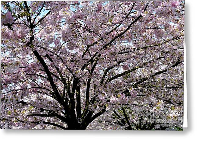 Greeting Card featuring the photograph Vancouver 2017 Spring Time Cherry Blossoms - 10 by Terry Elniski