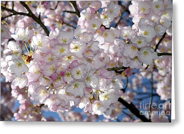 Greeting Card featuring the photograph Vancouver 2017 Spring Time Cherry Blossoms - 8 by Terry Elniski