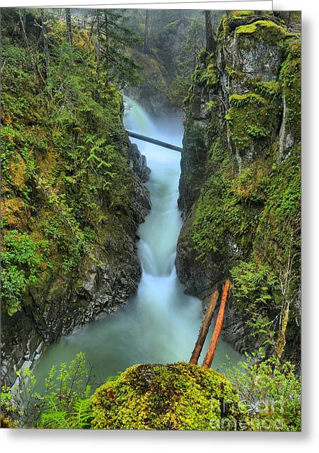 Vancouver Island Rainforest Falls Greeting Card