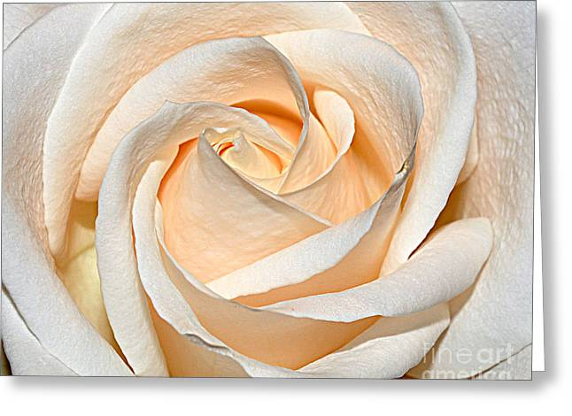 Vanilla Cream Greeting Card by Diane E Berry