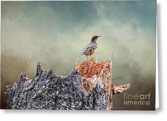 Varied Thrush On A Dead Tree Greeting Card