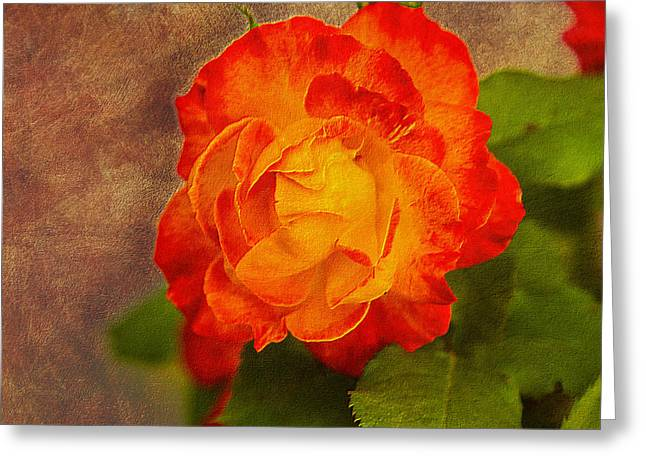 Variegated Beauty - Rose Floral Greeting Card by Barry Jones