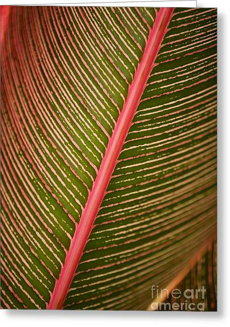 Variegated Ti-leaf 2 Greeting Card by Ron Dahlquist - Printscapes
