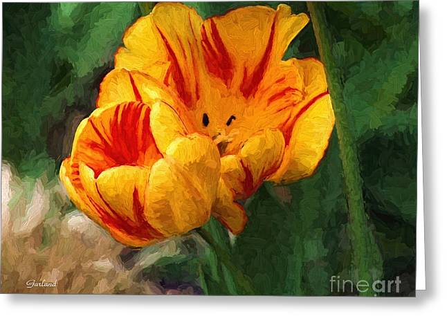 Variegated Tulip  Greeting Card