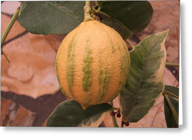 Varigated Citrus Greeting Card by Terrisita Grant