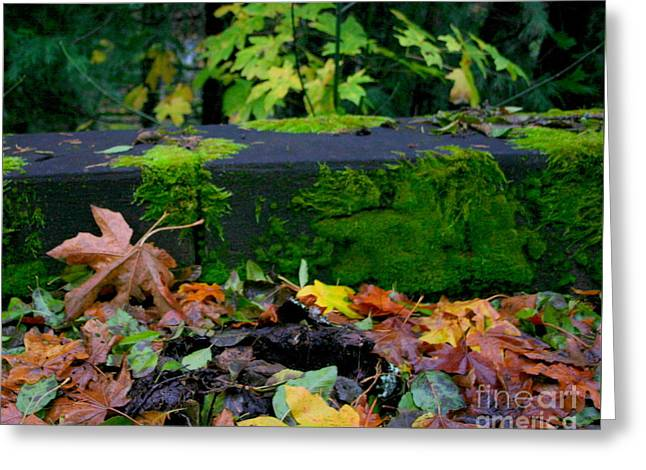 Varigated Fall Greeting Card