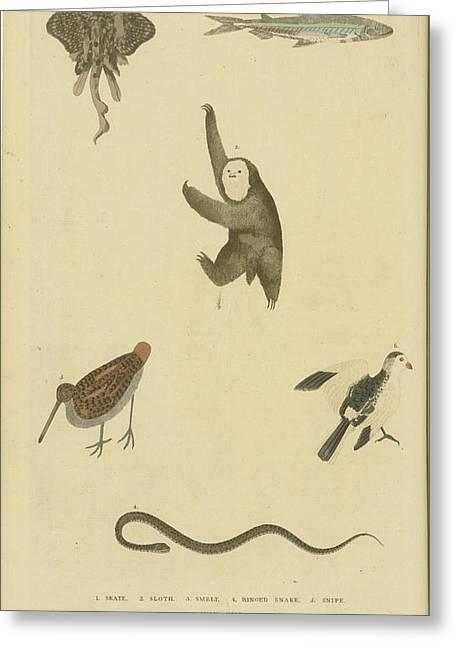 Various Birds Fish Greeting Card