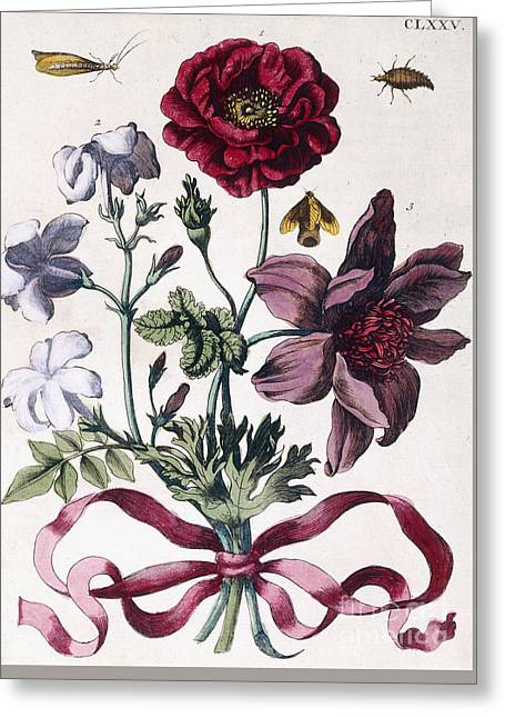 Various European Insects And Flowers Greeting Card
