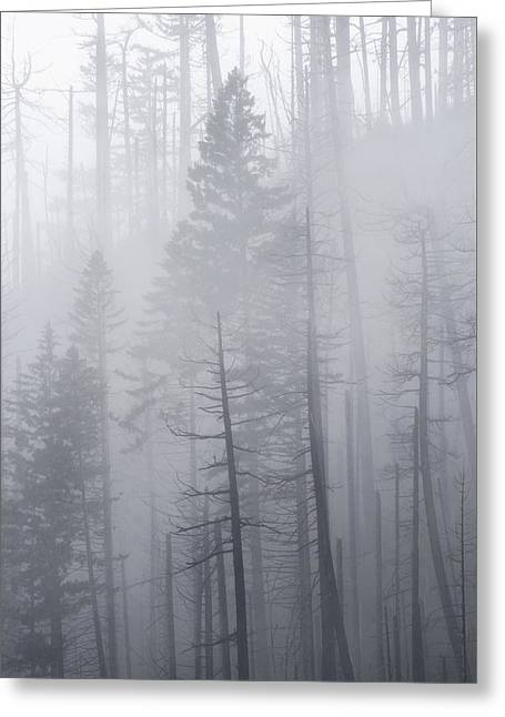 Greeting Card featuring the photograph Veiled In Mist by Dustin LeFevre