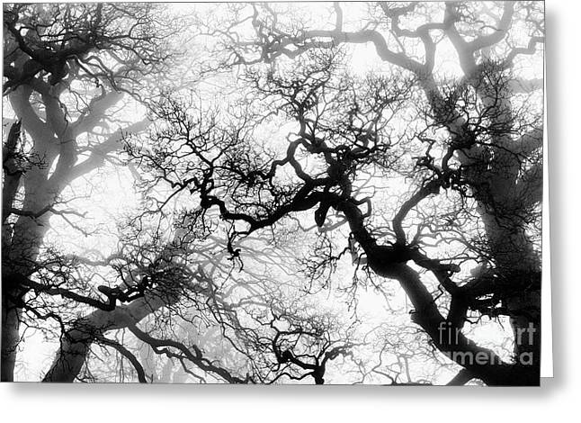 Veiled Tones Of Winter Greeting Card by Tim Gainey