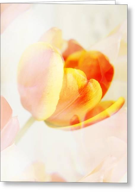 Veiled Tulip Greeting Card
