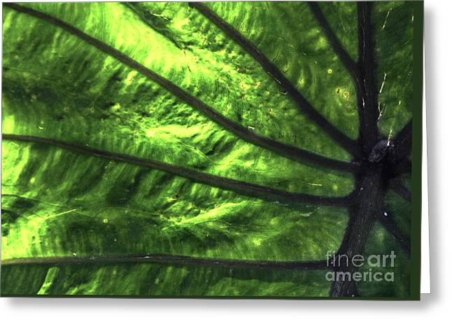 Veins Of An Elephant Leaf Greeting Card by Photo Captures by Jeffery