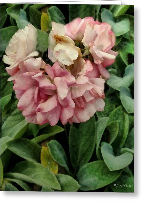 Velvet In Pink And Green Greeting Card by RC deWinter