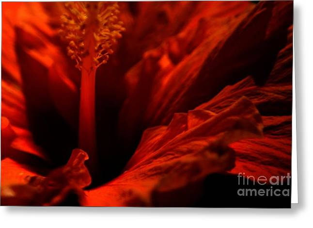 Velvet Seduction Greeting Card by Sheila Ping