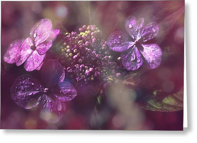 Velvet Touch Greeting Card by Nicole Frischlich