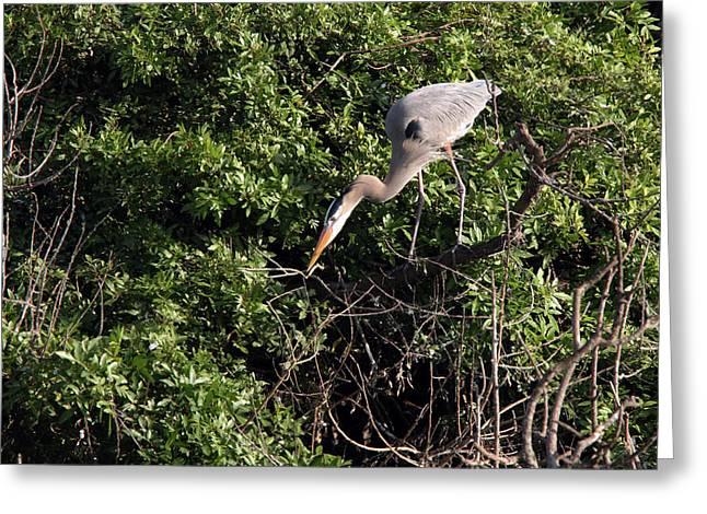 Venice Heron Greeting Card by David Yunker