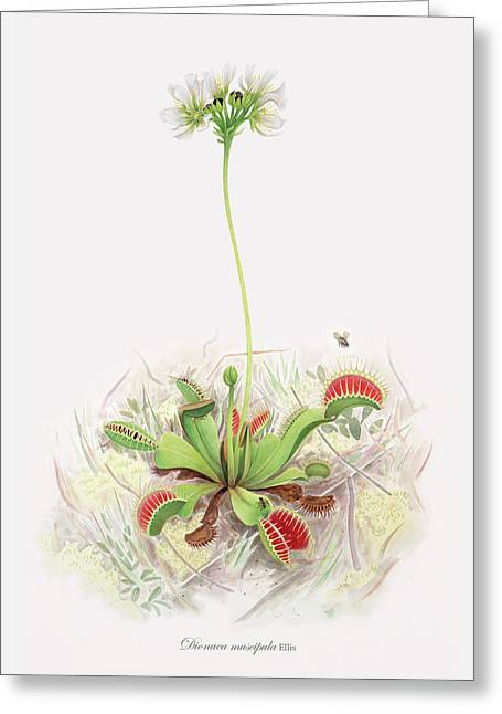 Venus Fly Trap  Greeting Card by Scott Bennett