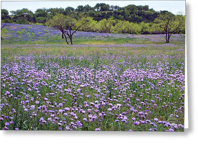Verbena And Blue Bonnet Landscape Greeting Card by Linda Phelps