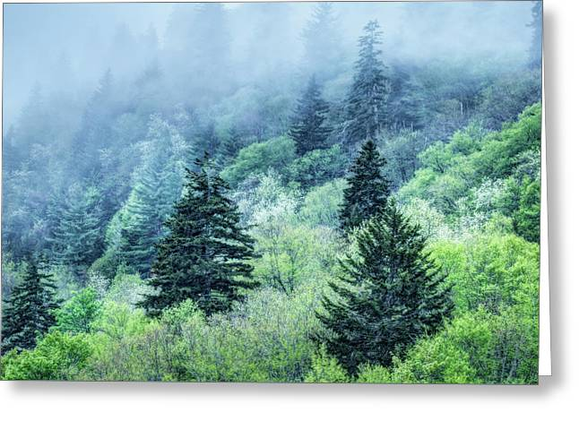 Verdant Forest In The Great Smoky Mountains Greeting Card