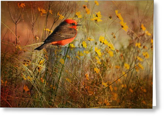 Vermilion Flycatcher At St. Marks Greeting Card
