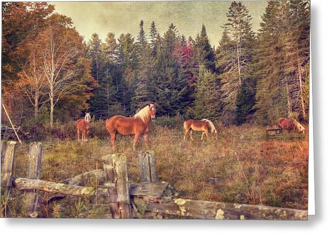 Vermont Horse Farm In Autumn Greeting Card by Joann Vitali