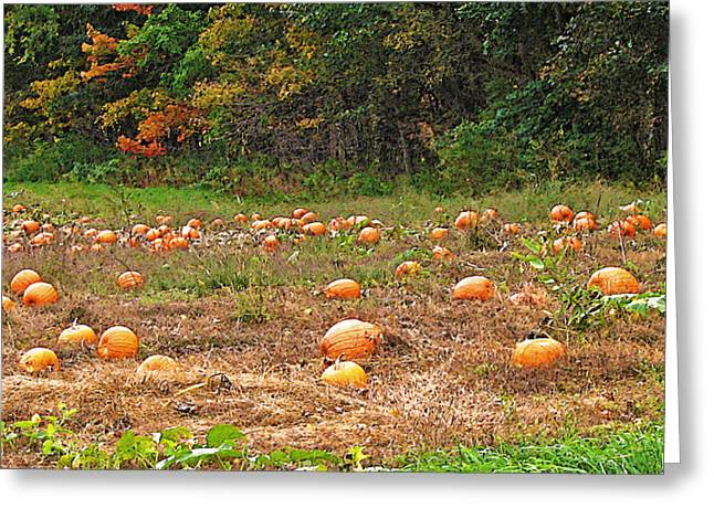 Harvest Time Greeting Cards - Vermont Pumpkin Patch Greeting Card by Steve Ohlsen