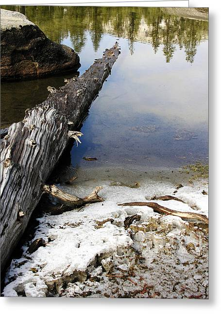 Vernal Pond I Greeting Card by D Kadah Tanaka
