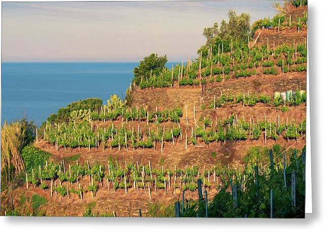 Vernazza Vineyards Greeting Card by Joan Carroll