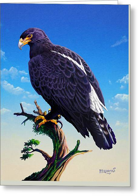 Verreaux's Eagle  Greeting Card
