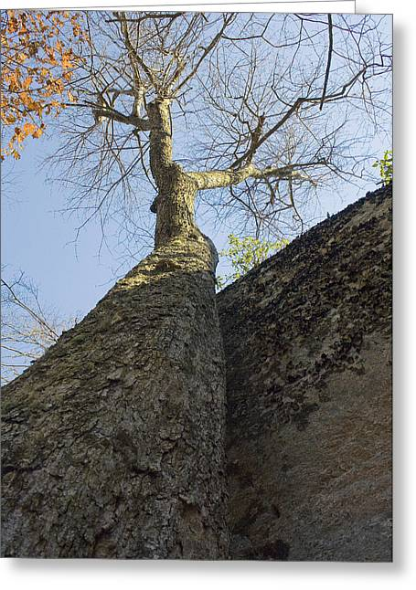 Greeting Card featuring the photograph Vertical by Alan Raasch