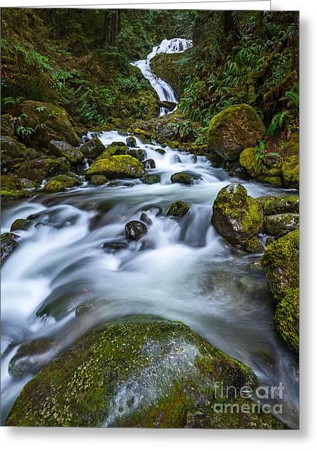 Vertical Bunch Creek Falls Greeting Card