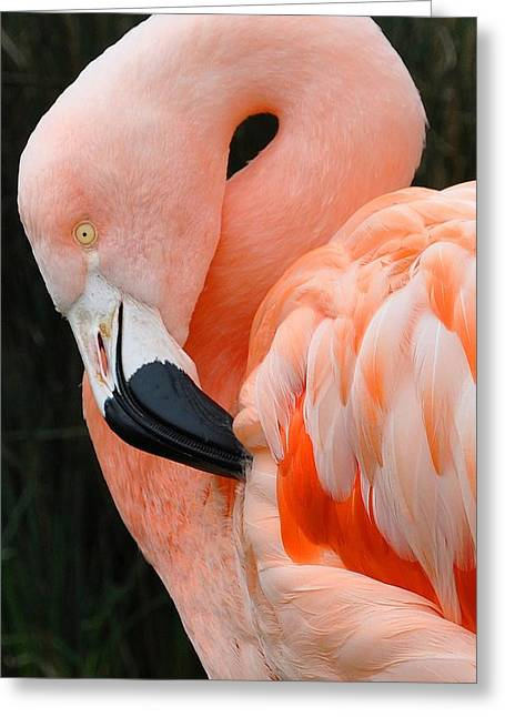 Very Pretty Bird Greeting Card