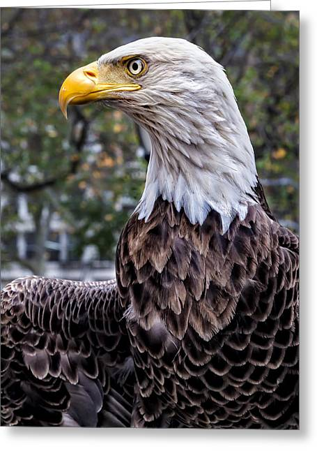 Veterans Day Nyc 11 11  2015 Challenger The Bald Eagle Greeting Card by Robert Ullmann