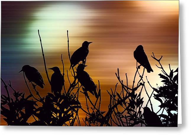 Vibrant Dawn Greeting Card by Sharon Lisa Clarke