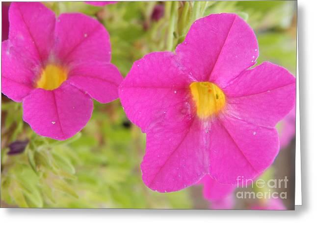 Vibrant Flowers Greeting Card