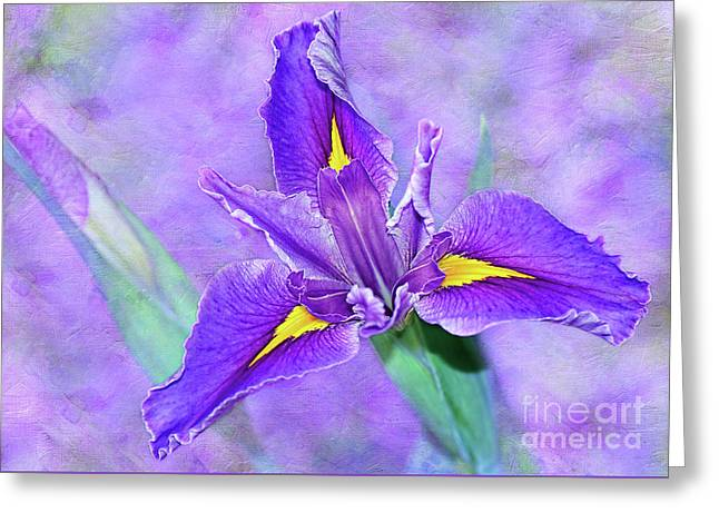 Greeting Card featuring the photograph Vibrant Iris On Purple Bokeh By Kaye Menner by Kaye Menner