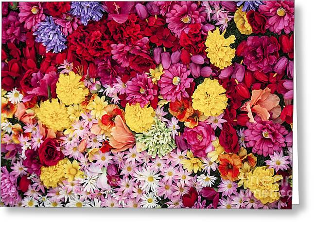Vibrant Life Greeting Card by David Millenheft