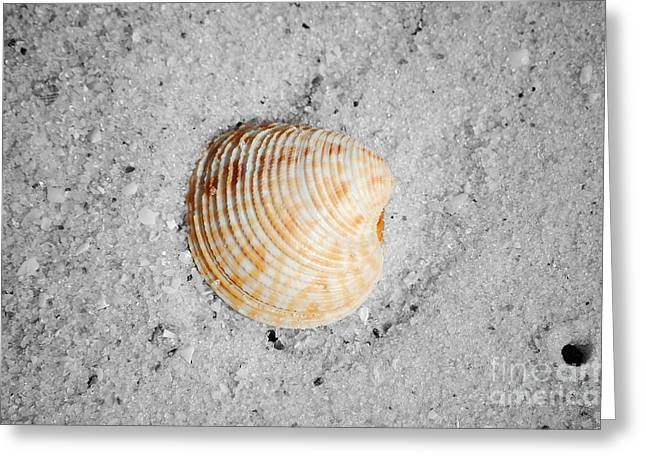 Vibrant Orange Ribbed Sea Shell In Fine Wet Sand Macro Color Splash Black And White Greeting Card by Shawn O'Brien