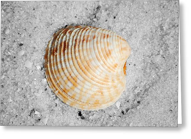 Vibrant Orange Ribbed Sea Shell In Fine Wet Sand Macro Square Format Color Splash Black And White Greeting Card by Shawn O'Brien