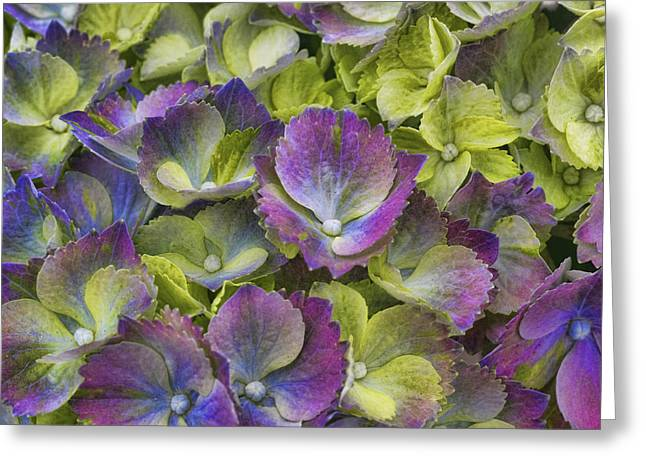 Vibrant Petals Greeting Card by Eggers Photography