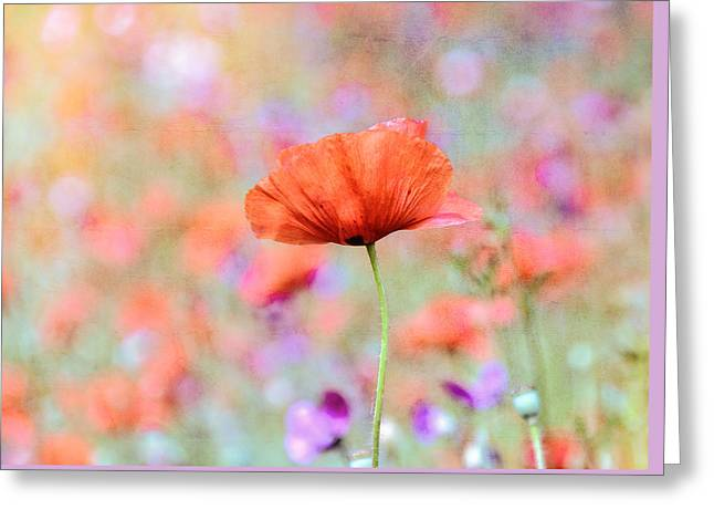 Greeting Card featuring the photograph Vibrant Poppies In A Field by Marion McCristall