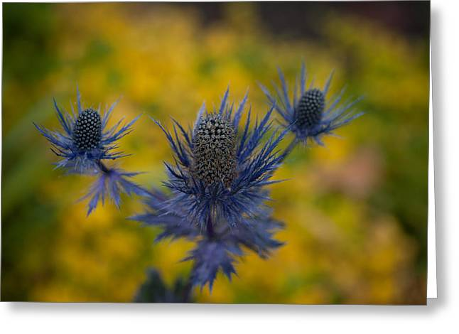 Vibrant Thistles Greeting Card by Mike Reid
