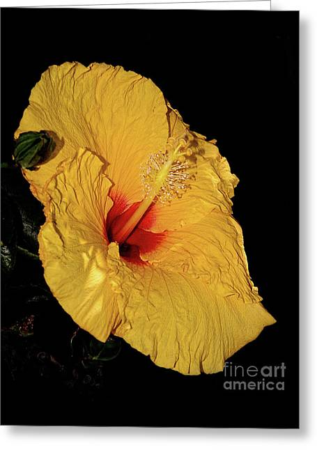 Vibrant Yellow Hibiscus By Kaye Menner Greeting Card by Kaye Menner